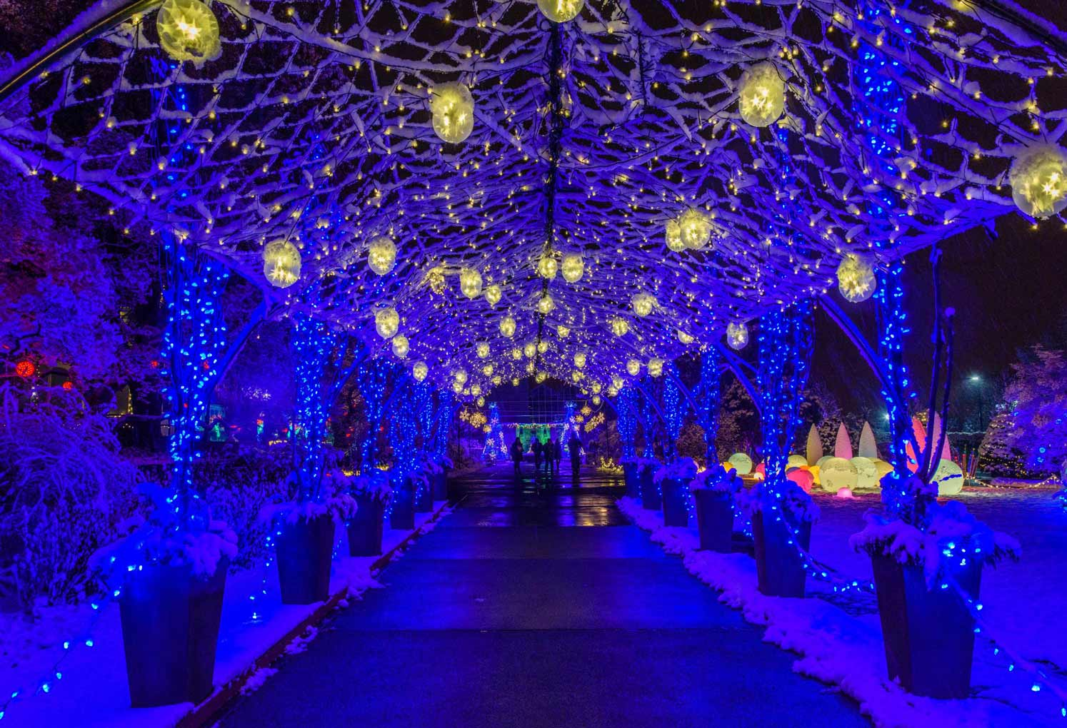 Love Phipps Winter Light Show Here S How We Helped